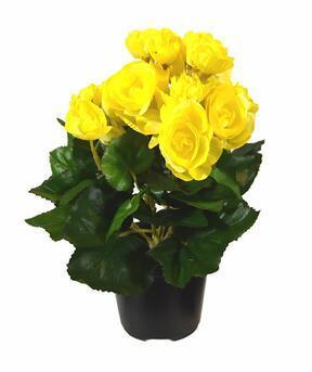 Planta artificial Begonia amarilla 25 cm