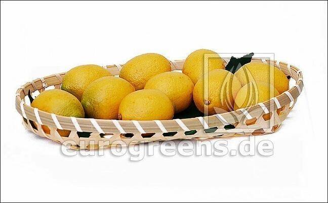 Limón artificial