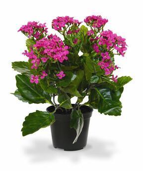 Planta artificial Kalanchoa violeta 30 cm
