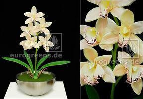 Planta artificial Orchidea Cymbidium crema 50 cm