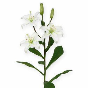 Rama artificial Lirio blanco 50 cm