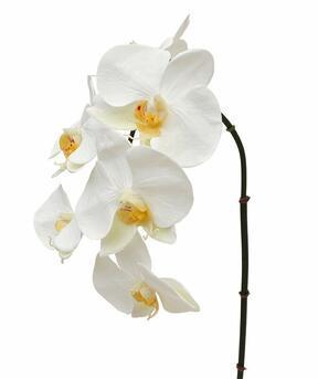 Rama artificial orquídea blanca 55 cm