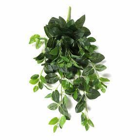 Zarcillo artificial Fitónia verde 80 cm